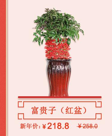 富贵子(红盆)